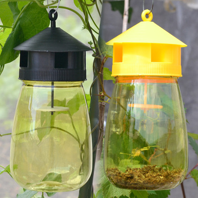 Insect traps with sexual attractant